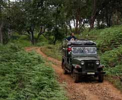 Holiday Package Bandipur