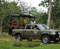Tour Package Bandipur